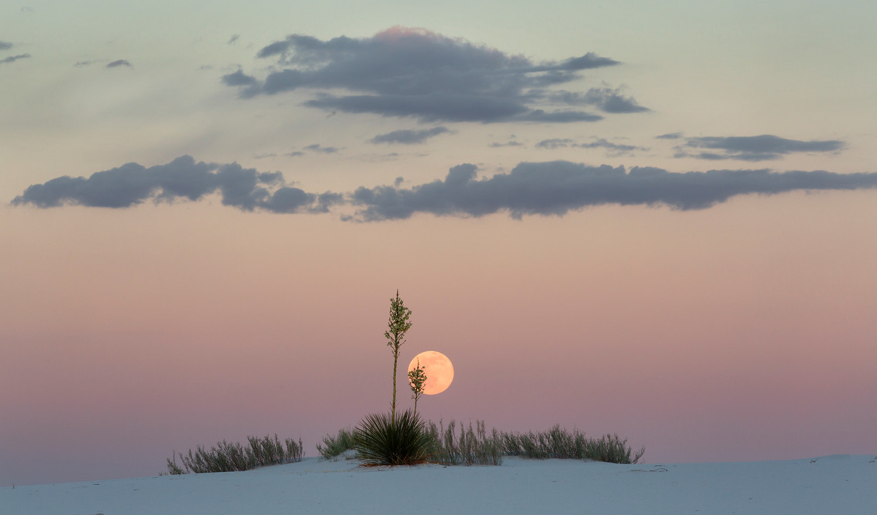 Moonrise Behind Yuccas, White Sands, New Meico