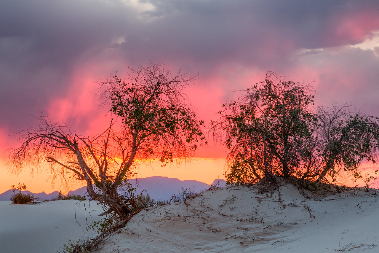 Cottonwoods Against Sunset Sky, White Sands National Monument