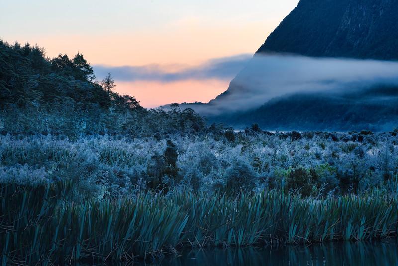 Frosty Morning in Fiordland National Park