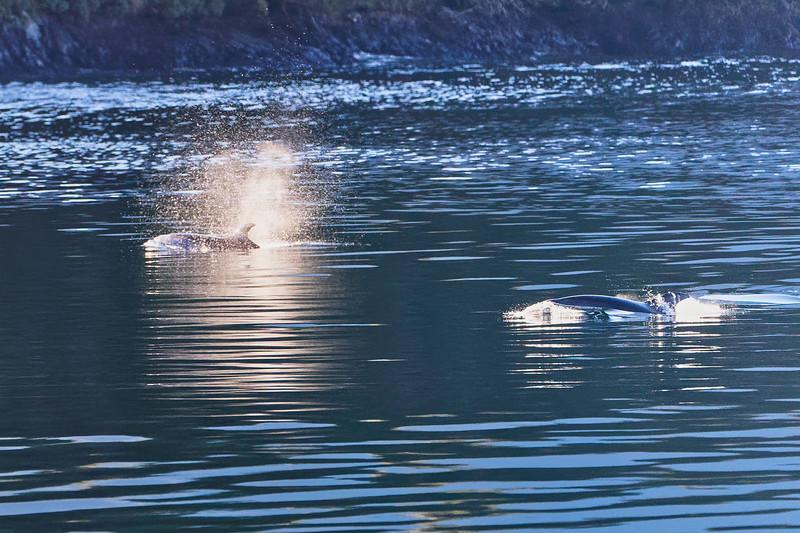 Jumpin Bottlenose Dolphins