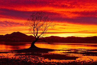 Sunrise Sky and Wanaka Willow