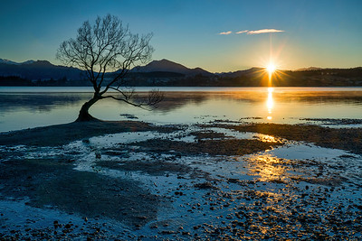 Sunrise Over Lake Wanaka and Willow