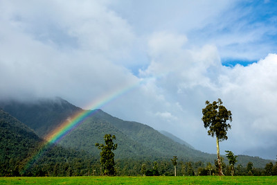 Rainbow and Beech Trees