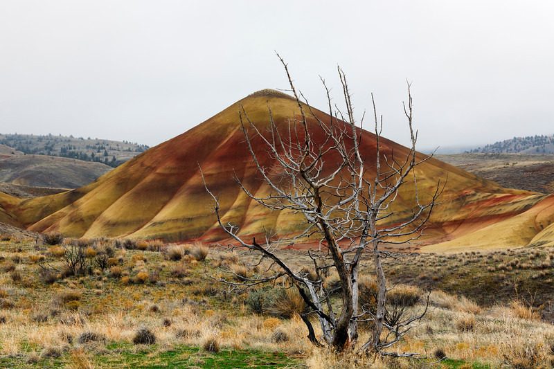Snag and Painted Hill