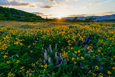 Sunset Over Wildflowers