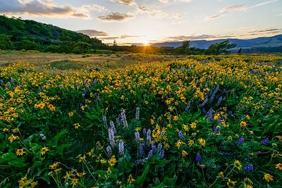 Sunset Over Wildflowers