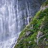 Waterfall and Spanish Beech Trees