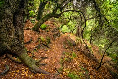 Moses Spring Trail Pinnacles NP