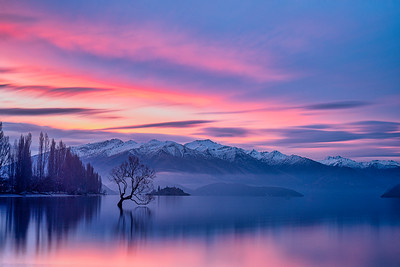 Wanaka Willow in Wanaka Lake at Sunset