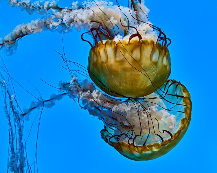 Jellyfish, National Aquarium, Baltimore