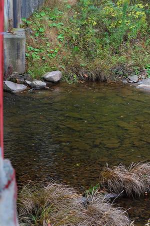 "IMG#2480 ""Little Fishing Creek"" runs underneath Sam Eckman Bridge Columbia county Pennsylvania. October 2009"