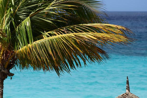IMG#0933 Early Morning Palms in Aruba-2010