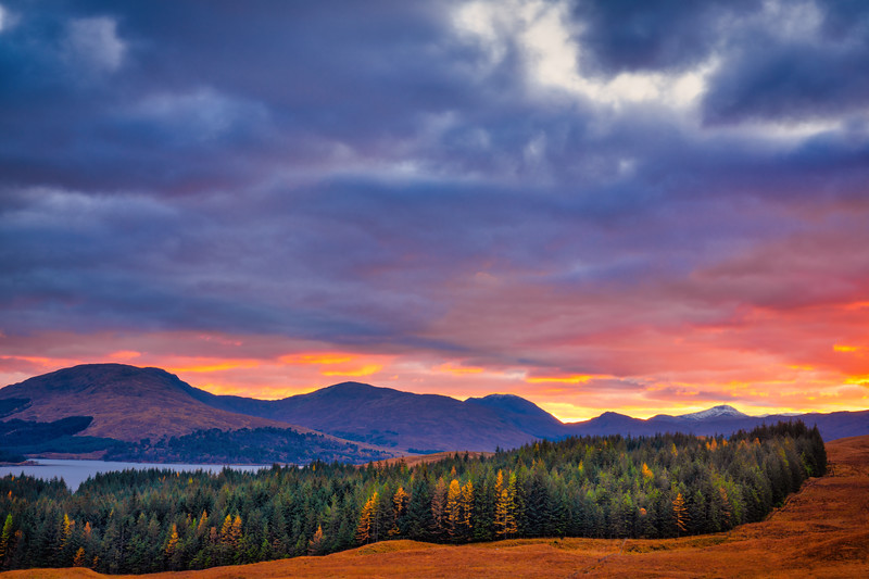 Scottish Highlands Sunset and Pines