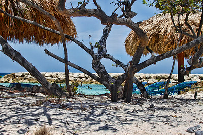 Divi Trees at De Palm Island...Aruba 2014