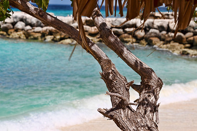 Divi Tree at the man-made lagoon on De Palm Island...Aruba 2014