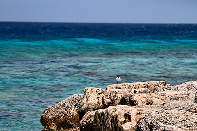 A single sea bird sits on the rocks at De Palm Island...Aruba 2014