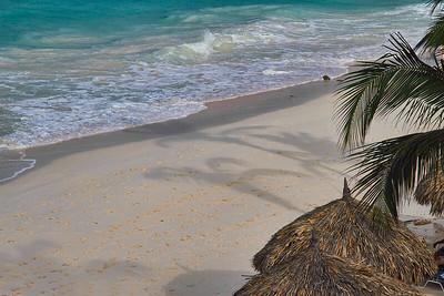 Early morning sun casts shadows of the Palm trees...Casa Del Mar, Aruba 2014
