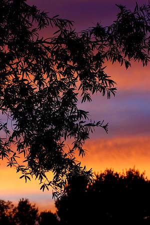 Backyard Sunset...July 2, 2017