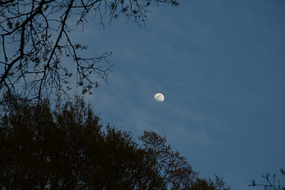 IMG#97 North Carolina Moon...rising