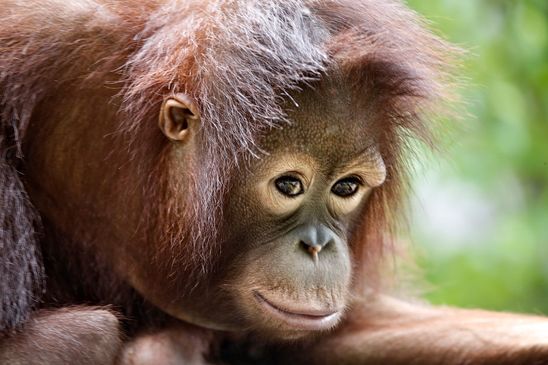 7) Relaxed Monkey_V5T7241