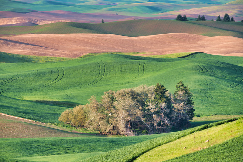 Spring Fields in Palouse