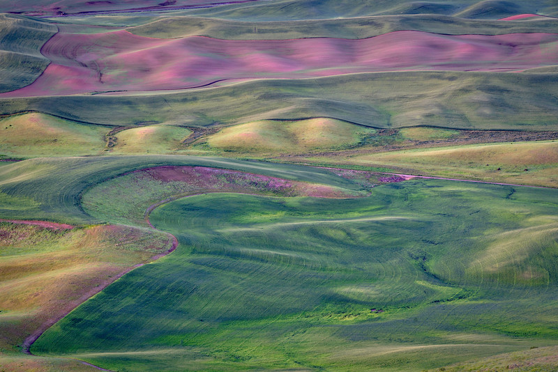 Palouse Hills and Color
