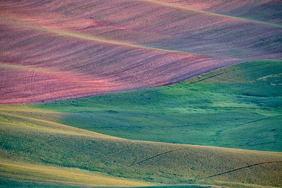 Early Morning Light on Palouse Fields