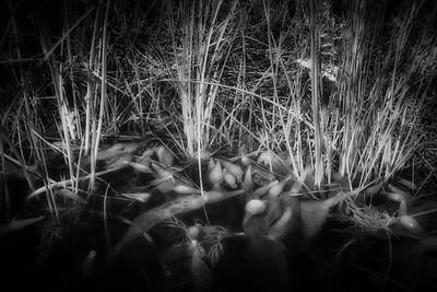 Grasses and Kelp Bulbs in Pfeiffer Creek