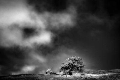 Lone Cypress and Fog, San Simeon, California