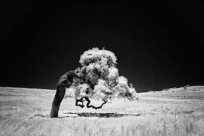 Take a Bow in Infrared