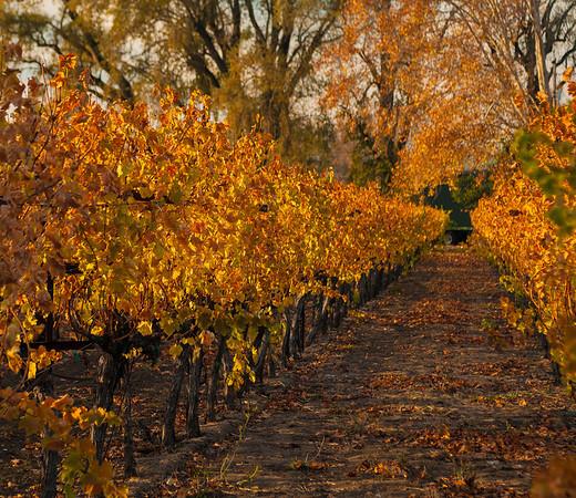 Fall in St. Helena