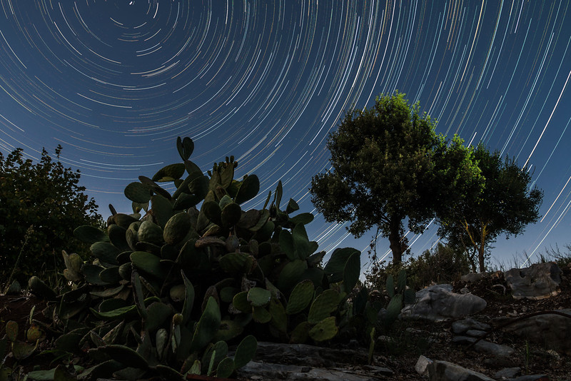 Prickly pear, trees and star trails.