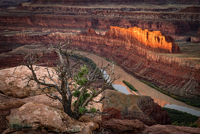 Juniper and Colorado River