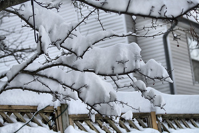 IMG#4297 New Jersey Winter-December 2009