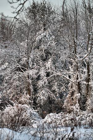 IMG#5485 Snow Covered Winter Wonderland New Jersey February 11, 2010