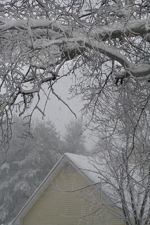 IMG5411 Neighbor's Roof February 10, 2010