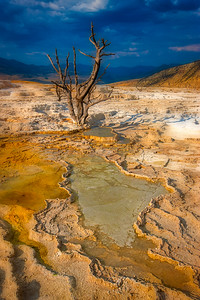 Dead Snag at Mammoth Hot Springs