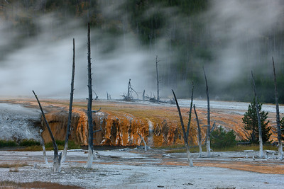 Blowing steam from a nearby geyser and resulting damage to foliage, Yellowstone National Park, Wyoming, USA.