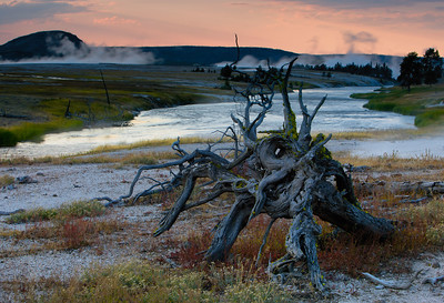 A snag and steam from geysers against dusk sky, Yellowstone National Park,  Wyoming, USA.