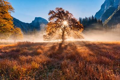 Backlit Elm, Cook's Meadow