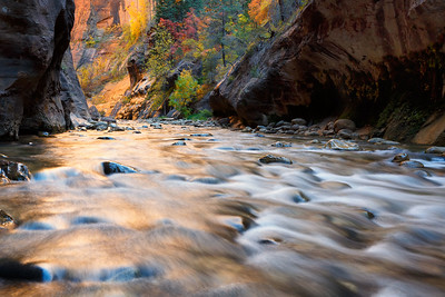 The Virgin RIver cuts through soft Kayenta Shale and past vibrant fall foliage, The Narrows, Zion National Park, Utah, USA.