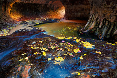 Aspen and maple leaves stick along the Kayenta shale inside The Subway, North Creek, Zion National Park, Utah, USA.