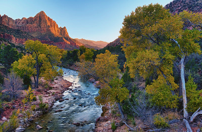 The Watchman catches the last warm light of the setting sun in this fall scene in Zion National Park, Utah, USA. The Virgin River runs through the length of Zion Canyon.