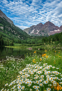 Maroon Bells  and Daisies, CO