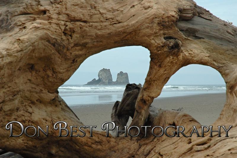 Twin Rocks Driftwood #6176