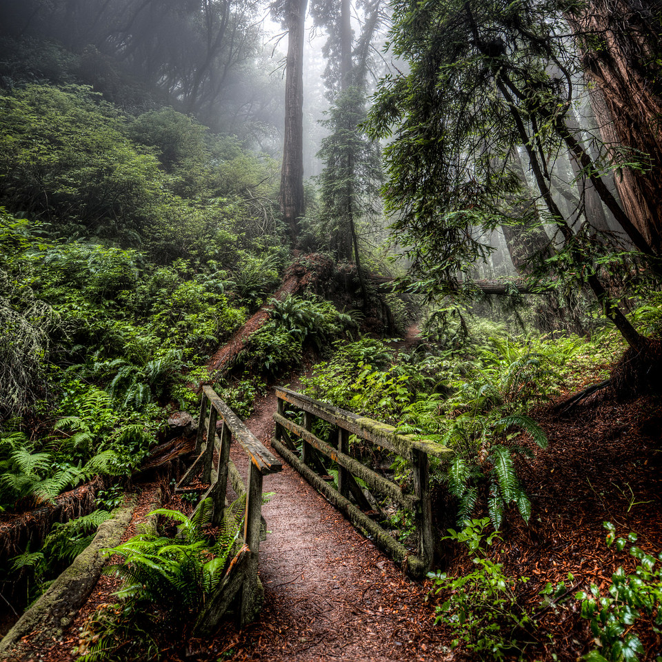 the mossy path | marin county