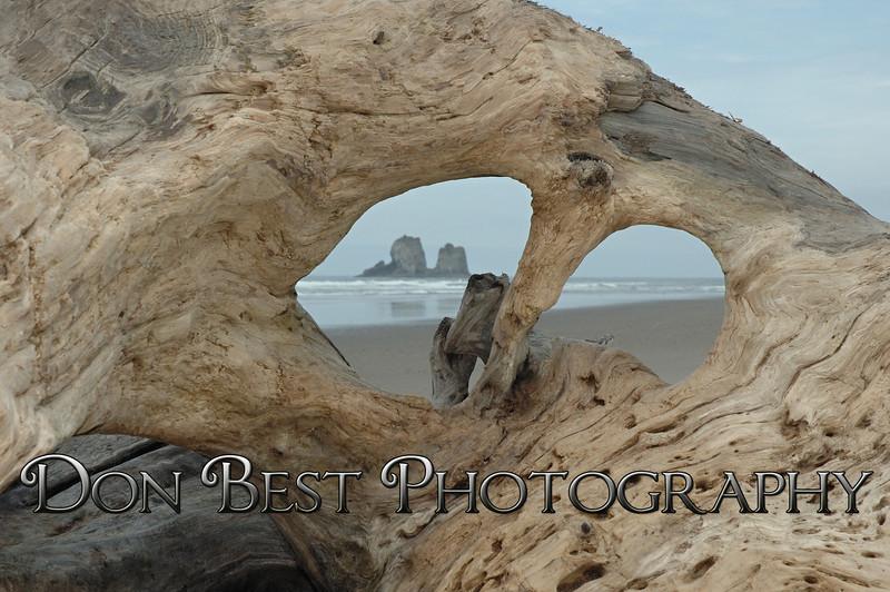 Twin Rocks Driftwood #6174
