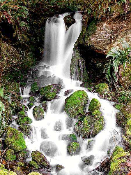 Falls<br /> <br /> Quinault Loop Road