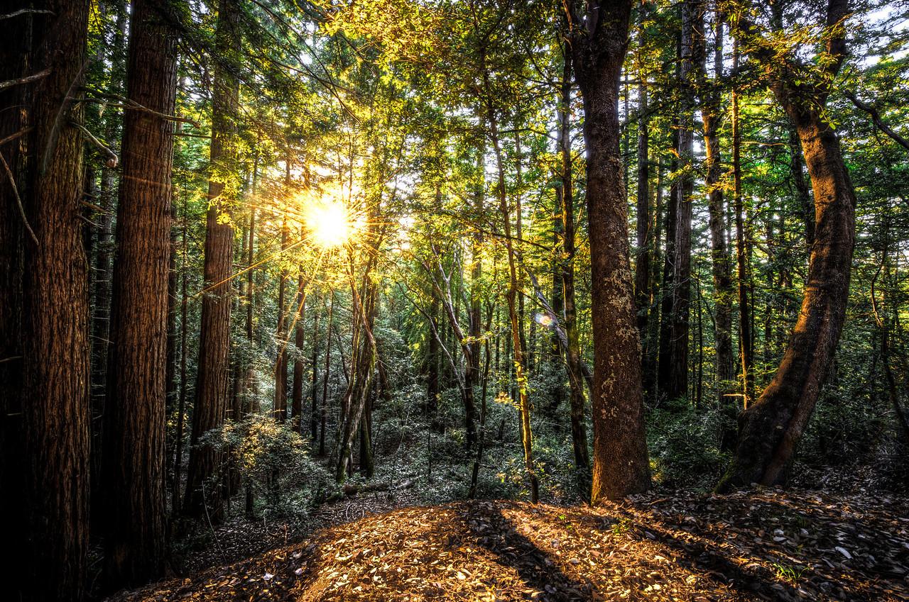 evening sunburst | woodside