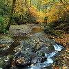 Fall Colors, N. Fork Cook Creek #6400